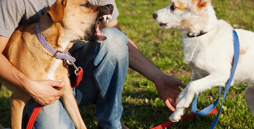 two dogs fighting lawsuit personal injury